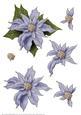 Poinsettia Decoupage Sheet Lilac