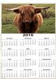 A4 Calendar Highland Coo