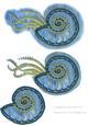 Fantasy Ammonites