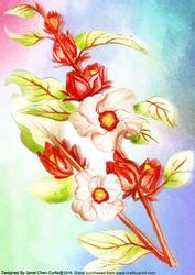 Herbal Garden-roselle