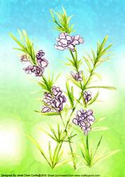 Herbal Garden-rosemary