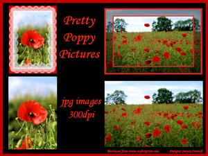 Pretty Poppy Pictures