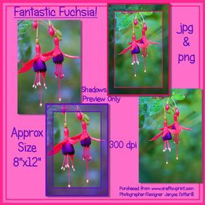 Fantastic Fuchsia!