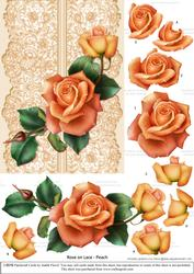 Roses on Lace - Peach on Peach