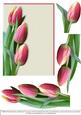 Tulips for Spring - Pink Blank