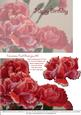 Carnations Card Front Plus - Birthday