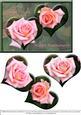 Anniversary Rose Hearts