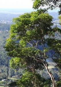 Treescape Image