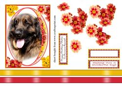 Lovely Dog in Pretty Floral Frame