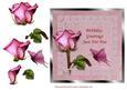 Sweetheart Rose - Birthday