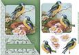 Birdsong Green Diagonal Card Topper