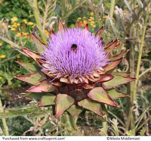 Bee in Artichoke