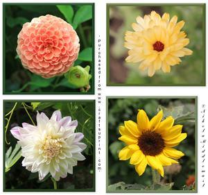 4 Framed Flowers
