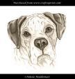 Boxer Dog Head Sketch