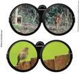 Binocular Set 2