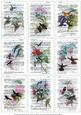 Vintage French Dictionary Hummingbirds