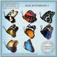 Real Butterflies 3
