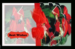 Wildflower Slot N Thread