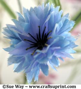 Blue Silk Flower Head