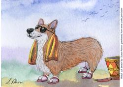 Watch Out, Beach! Corgi Dog is on His Way -