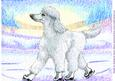 A4 Poodle Ice Skating