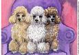 A Pack of Poodles