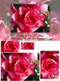 Rose Birthday Greeting Card Front