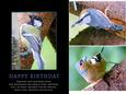 Garden Bird Birthday Quick Card