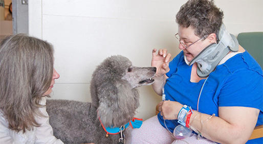 A patient at Greenwich Hospital, in Connecticut, interacts with therapy dogs. - PHOTOS COURTESY OF GREENWICH HOSPITAL