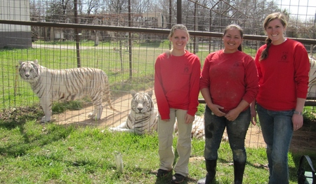Tigers And T Shirts T-Shirt Photo