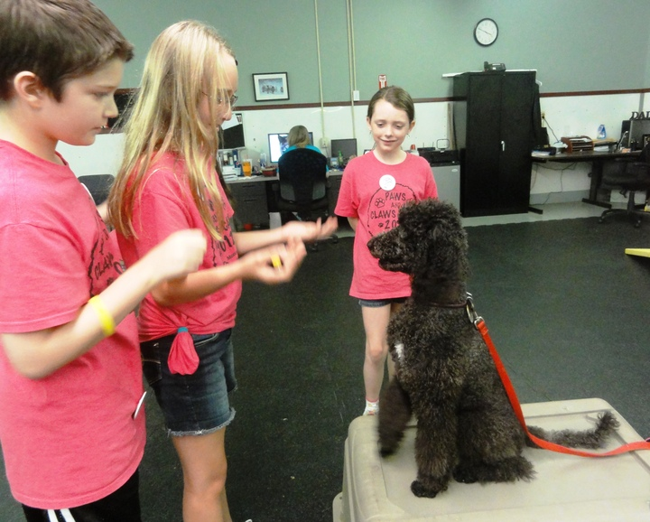 Dog Training At Paws And Claws Camp T-Shirt Photo