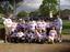 Studs baseball 2007 spring 15