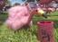 Flamingo w koozie