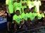 2013 naga team