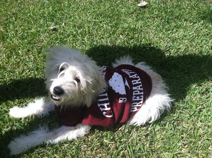 Sammy's School Spirit T-Shirt Photo