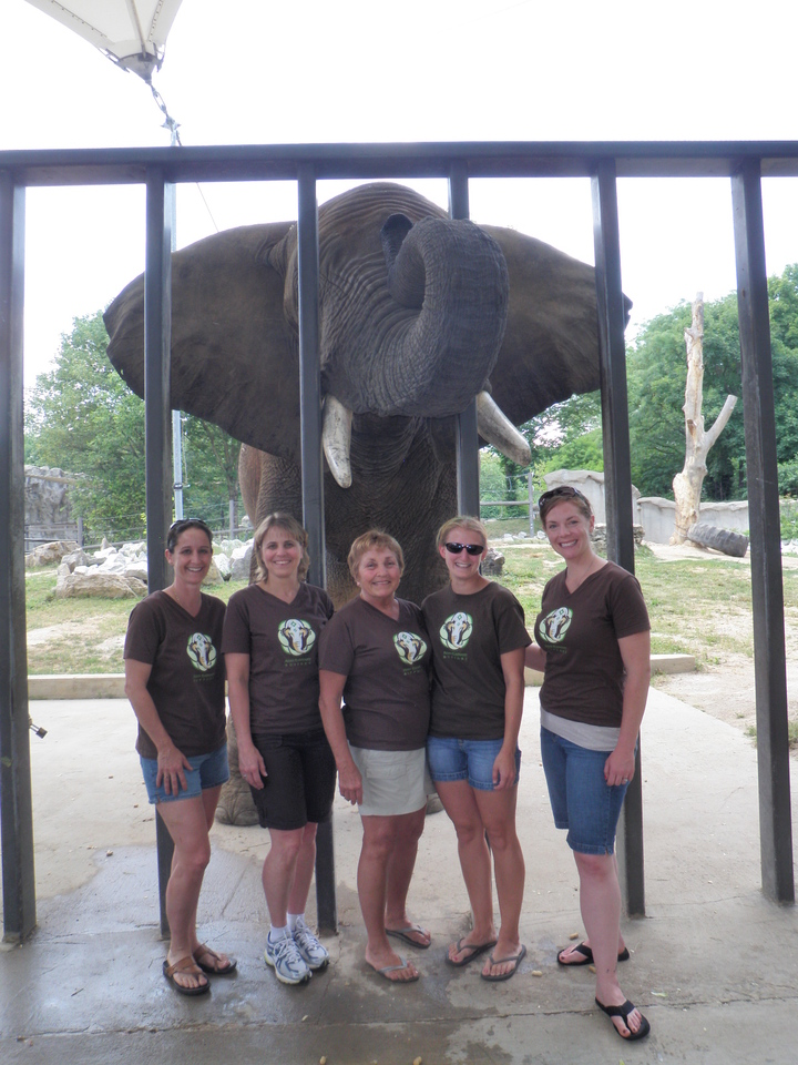 Asian Elephant Support Board T-Shirt Photo