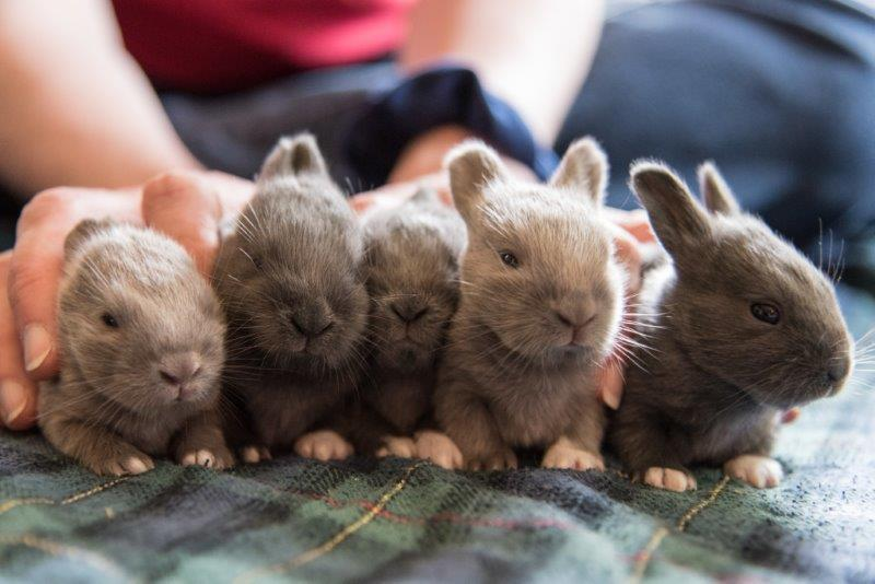 cute baby rabbits 27 pics that will melt your heart