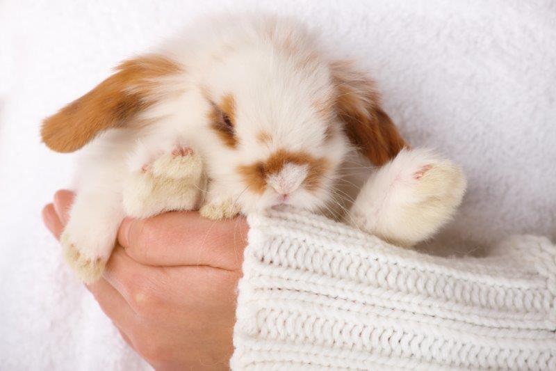 baby rabbit enjoying cuddles