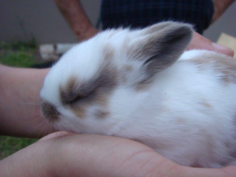 Cute baby rabbit sleeping in owners hands