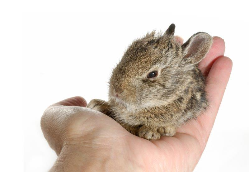 Cute baby rabbit comfy in dads hand