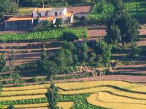 Photo from the front page of dailysource for Terrace farming in india