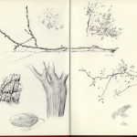 Oak Study - Darin Acosta New Orleans