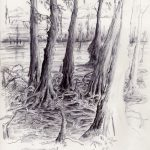 Cypress Study - Darin Acosta New Orleans Louisiana