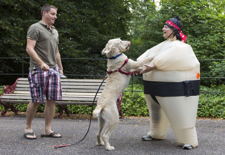 A dog jumps up onto a participant wearing an inflated suit before taking part in The Sumo Run in Battersea Park, London, on July 27, 2014. The Sumo Run is an annual 5km charity fun run around the park in inflatable sumo suits. (Justin Tallis/AFP/Getty Images)