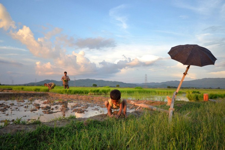 An Indian child plays as his parents work in a paddy field at Nagaon, some of 180 kms east of Guwahati on July 27, 2014. The annual monsoon season from June to October brings rains that are vital to agriculture in India. (Anuwar Hazarika/AFP/Getty Images)