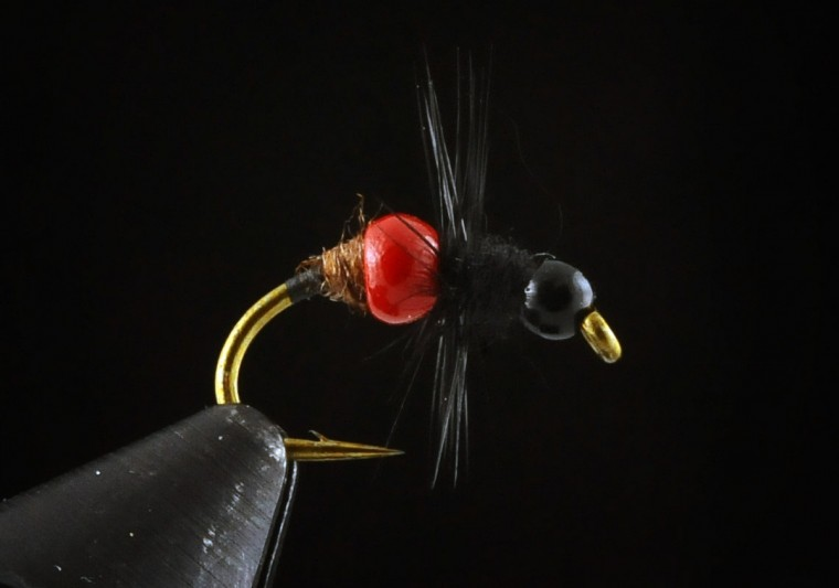This is Tungsten Ant fly. (Kenneth K. Lam/Baltimore Sun)