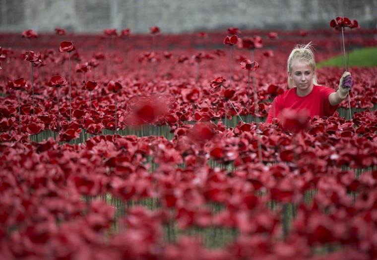 "A volunteer poses with a ceramic poppy amongst the art installation ""Blood Swept Lands and Seas of Red"" marking the anniversary of the World War One at the Tower of London July 28, 2014. The evolving installation by artist Paul Cummins will be formed of 888,246 ceramic poppies, to honor military fatalities during WWI. (Neil Hall/Reuters)"