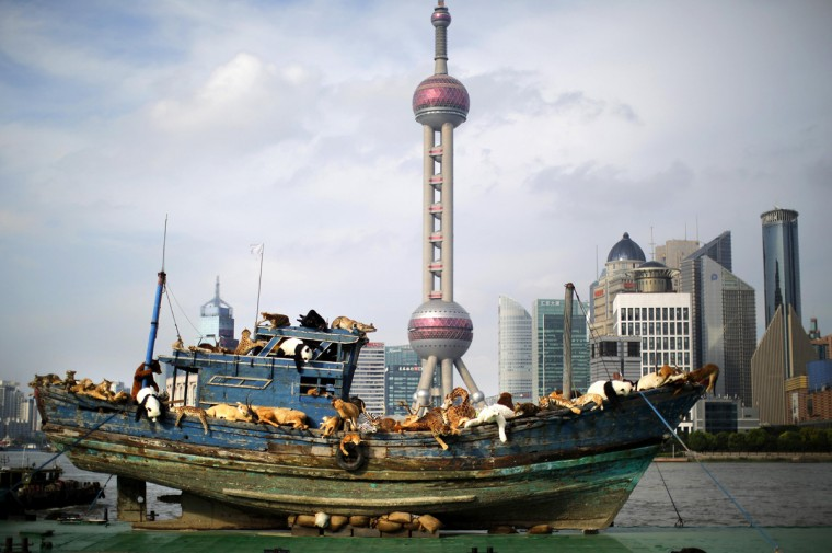 """""""The Ninth Wave,"""" an art piece by Chinese artist Cai Guoqiang sails down the Huangpu River as part of the 2014 Power Station Art exhibition in Shanghai July 17, 2014. The artwork features a fishing boat from the artist's hometown of Fujian depicting 99 fake stuffed animals that have been sickened by the environment. (Carlos Barria/Reuters)"""