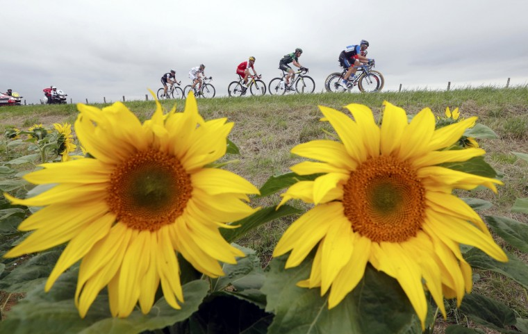 A group of riders cycles on its way during the 234.5 km seventh stage of the Tour de France cycling race from Epernay to Nancy July 11, 2014. (Jean-Paul Pelissier/Reuters)