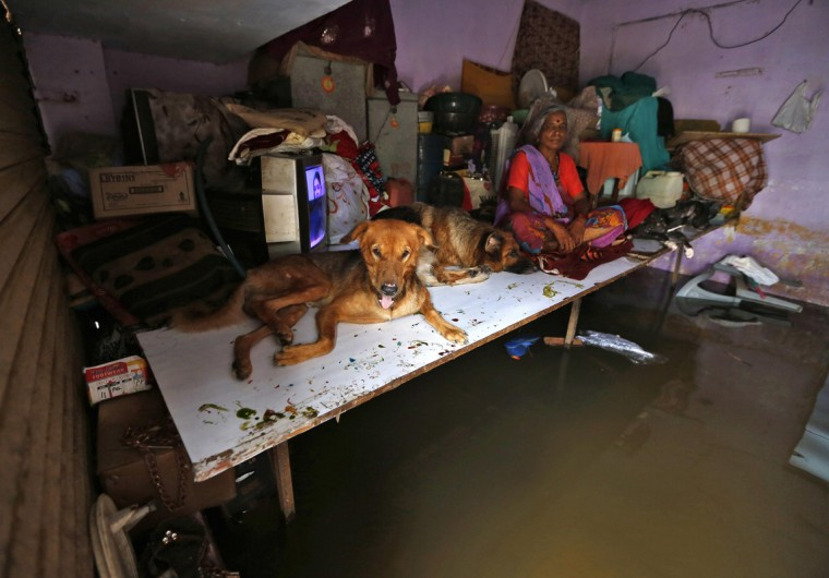 A resident sits with her dogs inside her flooded house after heavy monsoon rains in the western Indian city of Ahmedabad July 31, 2014. July, the second month of the monsoon season, usually gets the maximum rainfall, accounting for about a third of the seasonal downpour. REUTERS/Amit Dave